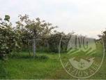 Immagine di LOTTO C appezzamenti di terreno agricolo in Comune di Mozzecane